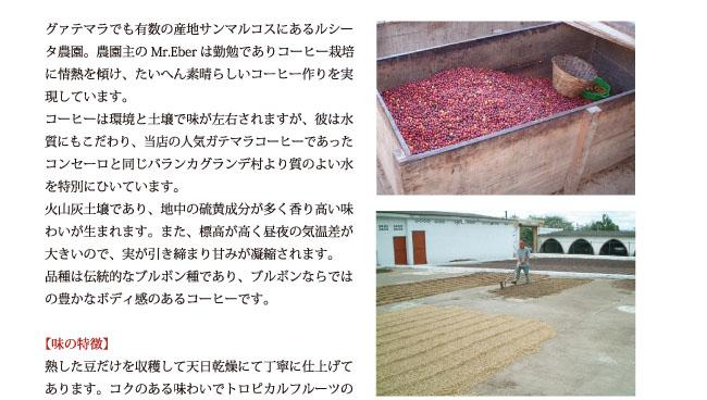 グァテマラ・ルシータ農園産コーヒーの紹介02