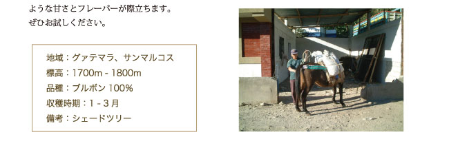 グァテマラ・ルシータ農園産コーヒーの紹介03