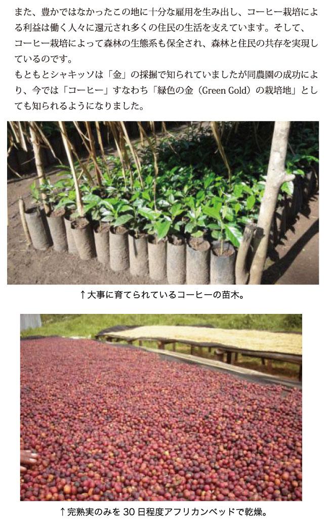 エチオピア・シャキッソ コーヒー説明03