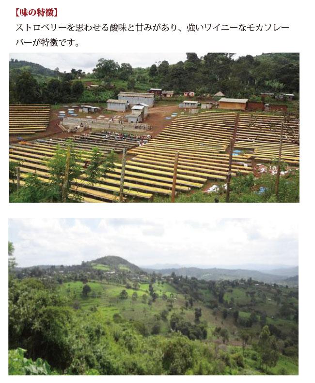 エチオピア・シャキッソ コーヒー説明04